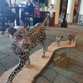 Leopards cake