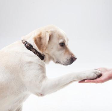 【絶対読んでほしい】犬の性質のハナシ③