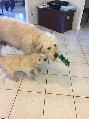 eadie teaching pup to play.jpg