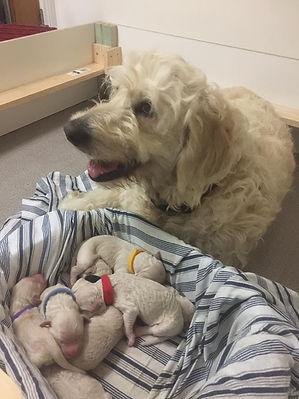 eadie smiling puppies in basket littter