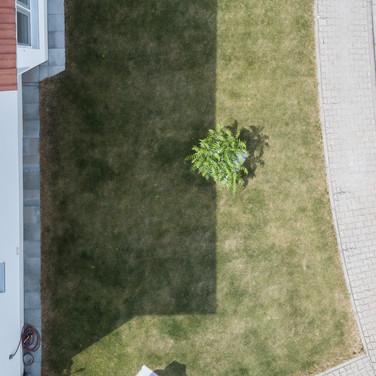 10. Englischer Rasen