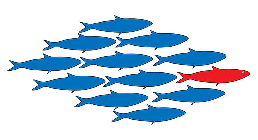 leader fish_l.jpg