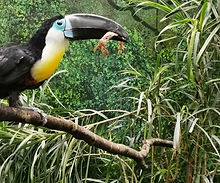 beauval-toucan-vacances-loir-et-cher.jpe