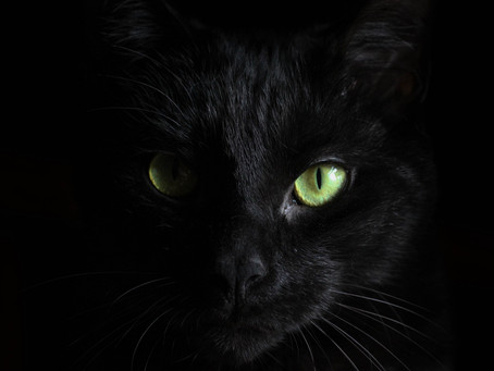 family adopts a mysterious black cat and discovers a strange truth about her after 6 months