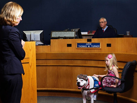 WHAT THIS DEAF BOXER DOG DID DURING HER TESTIMONY AT THE COURT CHANGED THIS GIRL'S LIFE FOREVE