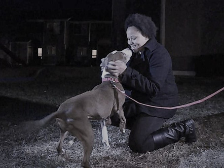 Ex Does The Unexpected To This Kansas Woman's Pitbull Forcing A Stranger To Intervene