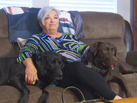 Woman finds neighbor's labradors barking infront of her house for a strange reason