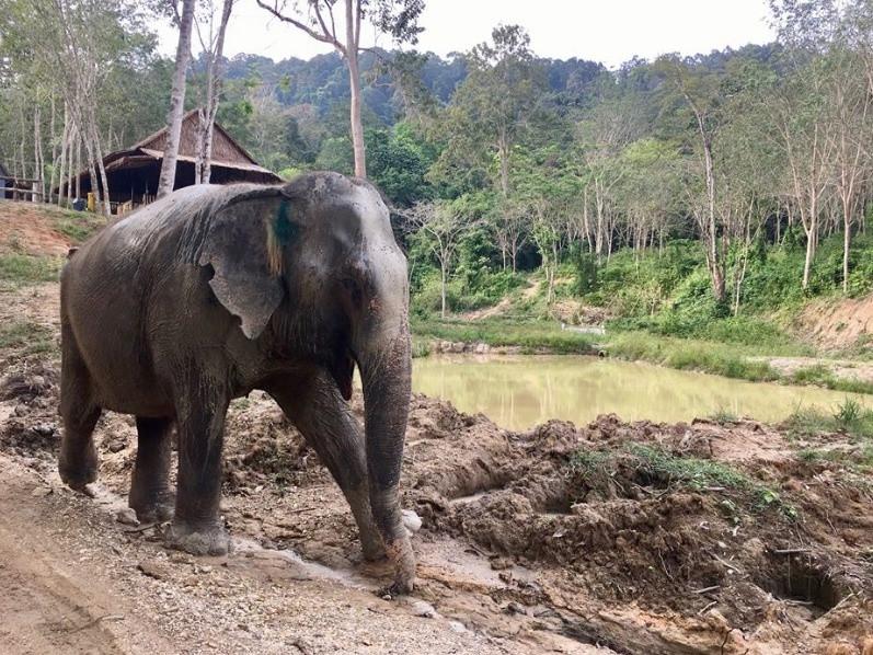 Image result for elephant depressed