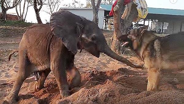 Image result for dog elephant friendship duma