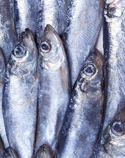 Pesce d'argento