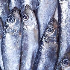シルバー魚