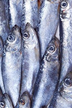 zilveren Vissen