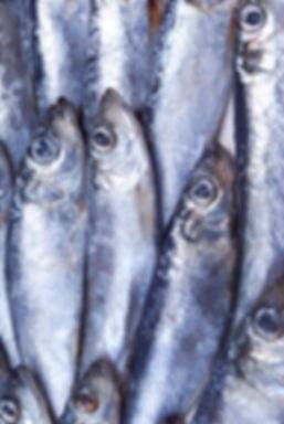 Silver Fish
