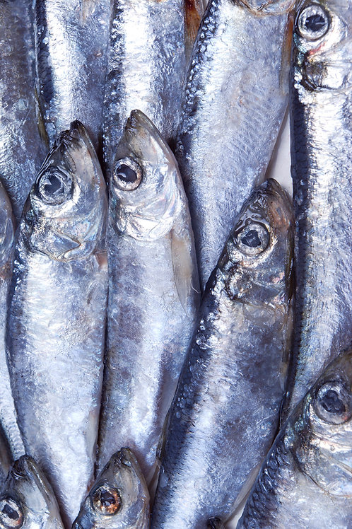 Sprats or Herring 2kg