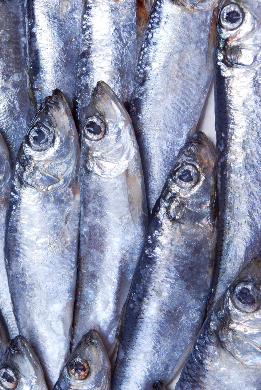 Omega 3's for weight loss are found in fish