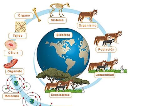 El rol de la Economía Circular y su función en organismos a distintas escalas.