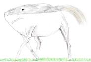 HORSESHARK