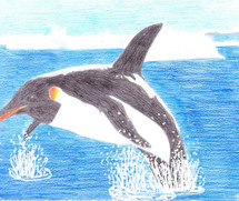 PINGUEWHALE