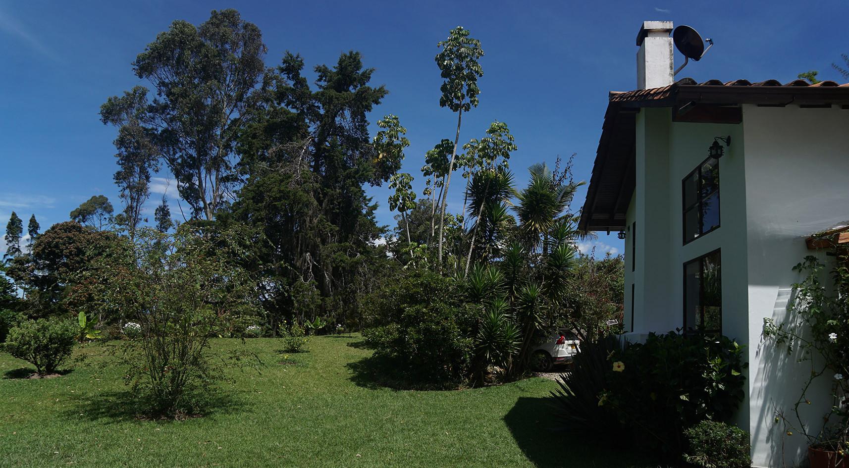 Ayahuasca Colombia.jpg
