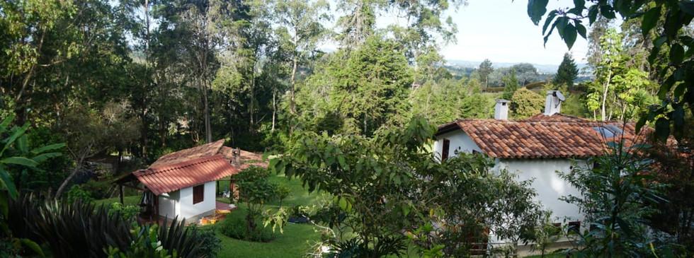 Ayahuasca Kambo Colombia
