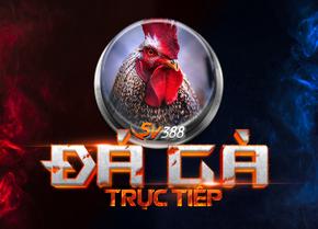 Đá gà SV388 là gì? Sức hút của Đá gà Online SV388