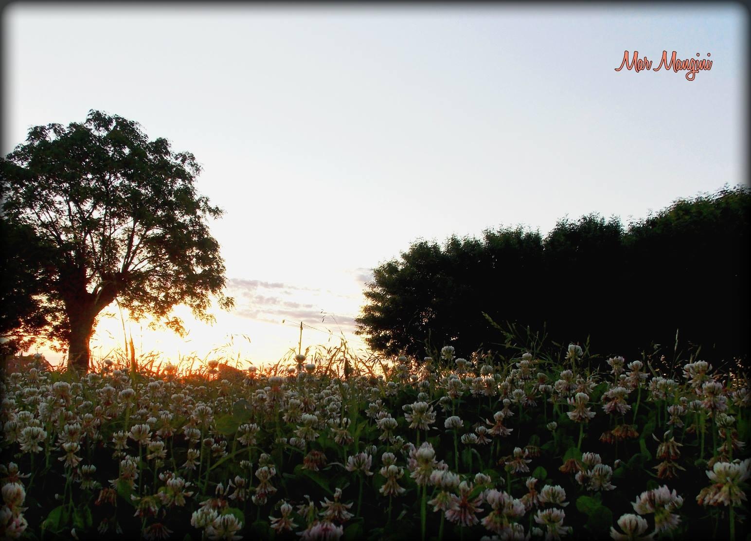 Flores y espinas Baradero