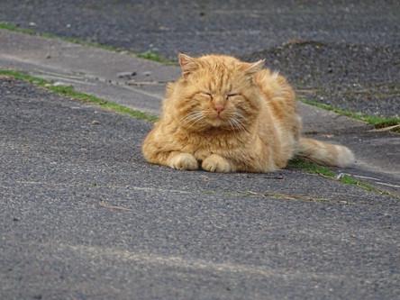 Le chat roux en mode sphynx
