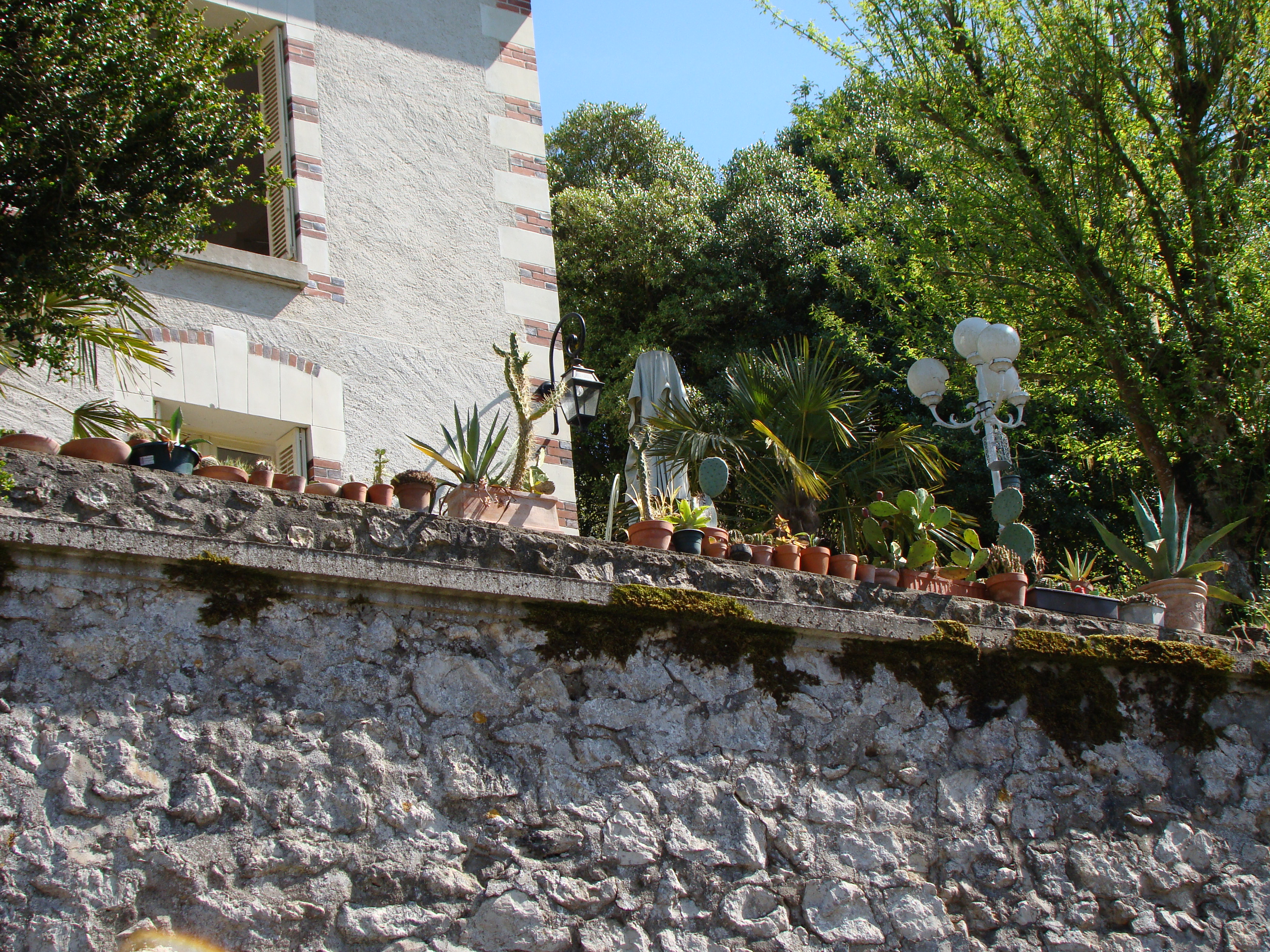 maison aux cactus