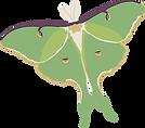 luna-moth-3x3.png