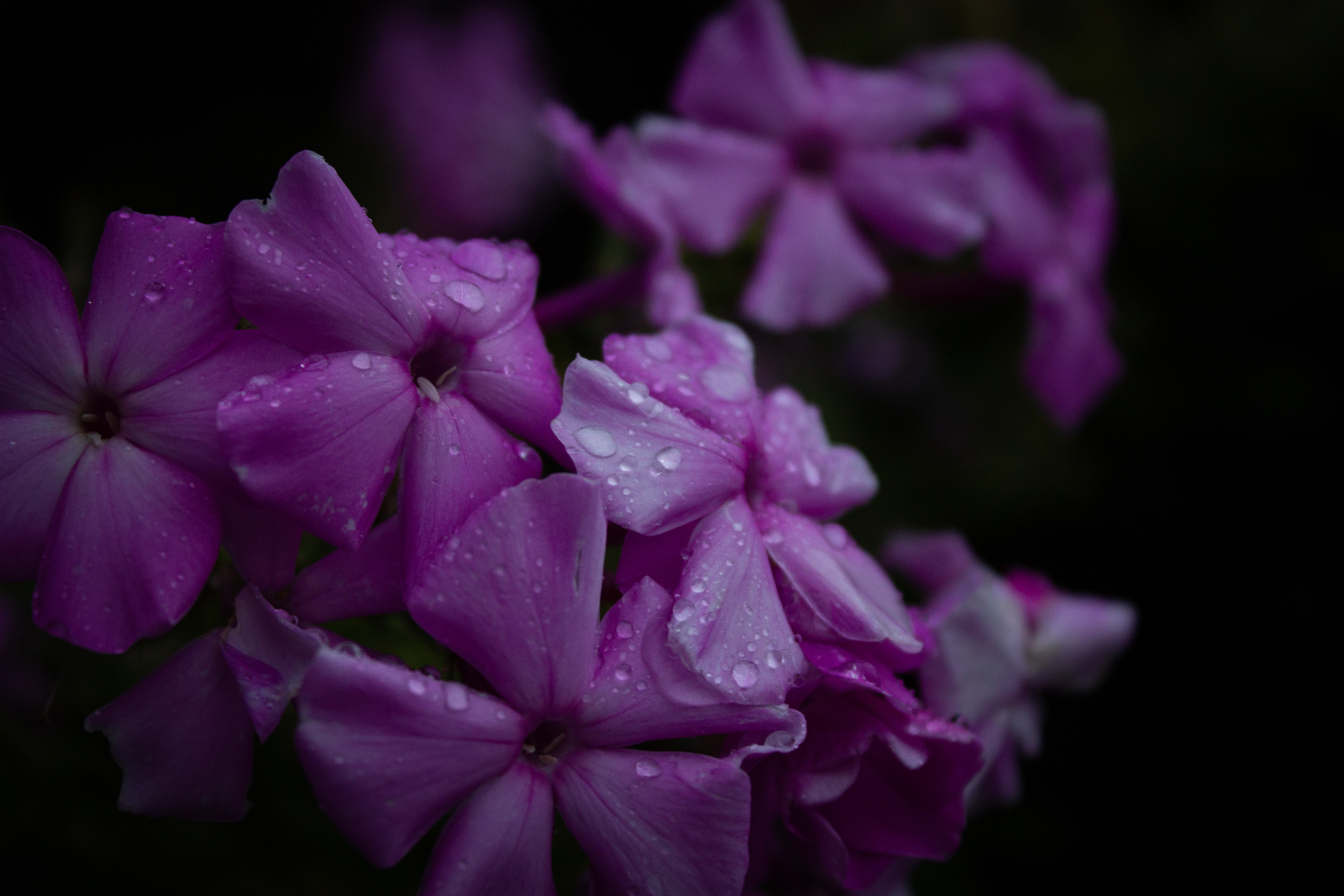 Purple Flowers Photography