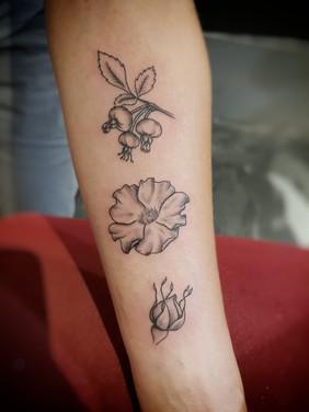 Wild rose tattoo by Larissa Long