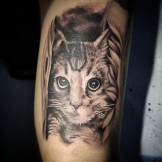 Realistic Cat Tattoo by David Baran