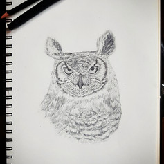 Realistic Owl Portrait by Larissa Long