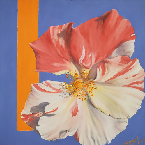 "Susan Kiefer: ""Candy-striped Rose"""