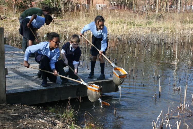school pond dip from platform.jpg