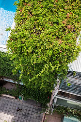 """016.  The Breathing house is for a single family, located in the heart of Ho Chi Minh City. The plot is 3.9m wide and 17.8m deep, only accessible by a tiny alley with crowded surroundings. Within this extremely high-dense neighborhood, we aimed to design a house that introduces an external environment while ensuring privacy.  Due to the circumstances of the site, the opening of the building was physically constrained to the front, top and back of the house. In order to adjust the distance between neighboring buildings while maximizing the opening area, we wrapped the aforementioned three surfaces of the building with a """"green veil"""", which is made of creeper plants that grow on a steel mesh. This soft layer, as an environmental diffuser, filters direct sunlight and prevents the interior space from overexposure to the outside, without the feeling of isolation. It is composed of planter boxes at each floor slab, with modularized galvanized steel elements attached to it. This structure provides a green view throughout the house, which also protects the residents from urban crime.  Inside the """"green veil"""", the building consists of 5 tower-like volumes that are staggered and connected to each other, arranged in between the two boundary walls. The external spaces created by the staggered arrangement of the volumes, which we call """"Microvoids"""", play a role in providing myriad indirect lighting and ventilation routes throughout the building. In the narrow and deep plot shuttered by neighbors on both sides, it is more environmentally effective to promote ventilation for each corner of the house, by multiple """"microvoids"""", rather than having a singular large courtyard. The """"microvoids"""" have openings on each of the floors, through which the residents have a more longitudinal and diagonal see-through view from everywhere, looking into the green and other spaces. The staircase is also designed as one of the microvoids with top light and openings facing the rooms. The porous composi"""