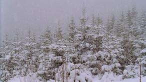 Roumanie : pour passer l'hiver