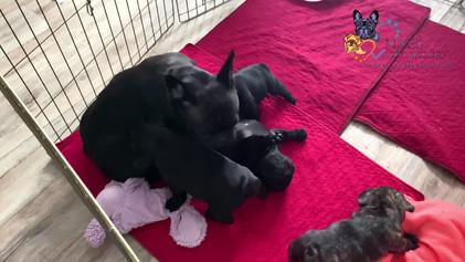 малышам 5 недель