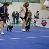 Национальная выставка собак всех пород ранга САС/ЧФ  г. Смоленск