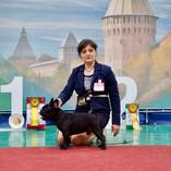 Выставка собак всех пород ранга САС г. Смоленск.