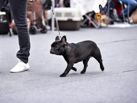 Выставка собак всех пород ранга САС ЧРКФ