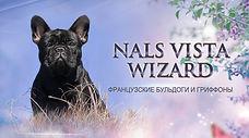 питомник французскиз бульдогов Налс Виста Визард