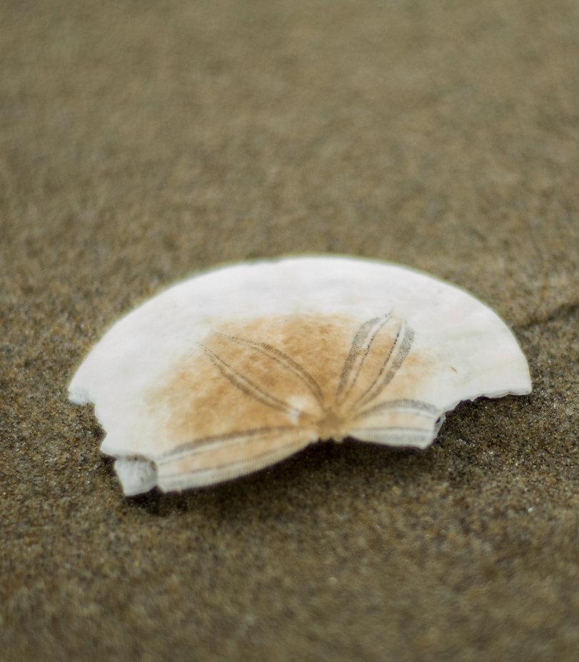 Cher sand broken finak.jpg