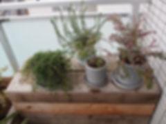 plantscapedesign sou  ベランダ 植栽 品川区 ガーデニング