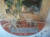 plantscapedesign sou  ベランダ|植栽|品川区 ガーデニング