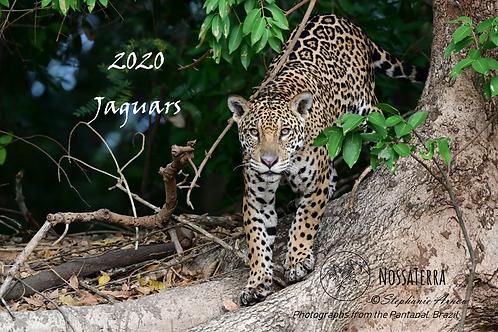 2020 Calendar - Jaguars of Brazil