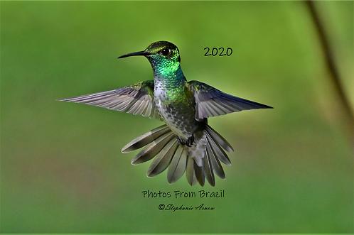 2020 Calendar - Wildlife of Brazil