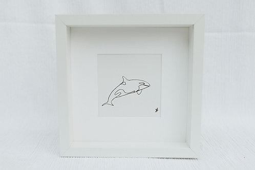 orca - illustration