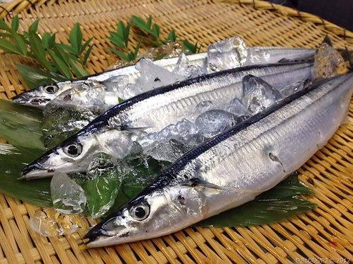 日本原條活秋刀魚刺身