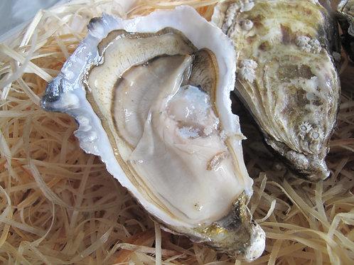 法國白珍珠White Pearl N2